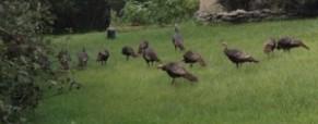 Poconos Mountain Resorts, Common Wildlife That May Scare You